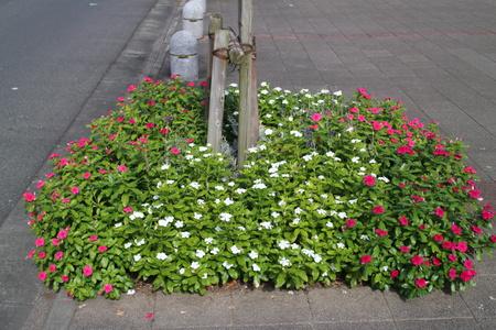 ポンパドウルやMYU/MYU前にきれいな花壇を作りました!