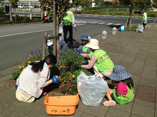 研究学園駅周辺花壇の花柄摘みをしました!幼稚園児も小学生もがんばりました!