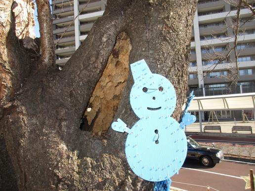 【今昔27】研究学園駅前のシンボル!桜よもっと元気になって!