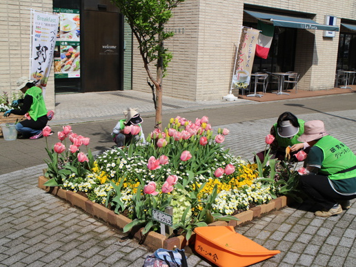 研究学園駅前はチューリップが咲き誇り華やかです!