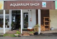 知識豊富でイケメンオーナーの熱帯魚屋さん「Aquariumshop Breath」