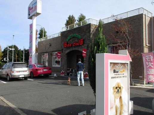 ドッグサロン「ビークラブ」の新店舗にできるネコカフェにはネコがうじゃうじゃいるそうです!