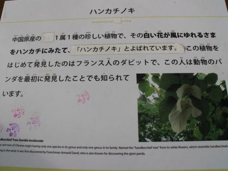 「筑波実験植物園」クレマチス園公開!白いハンカチが揺れる木を発見!