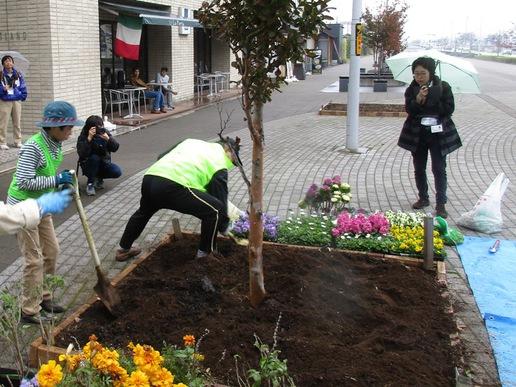 研究学園駅前ホテル「ベストランド」周辺に花壇を作りました!きれいな花壇です見てください!