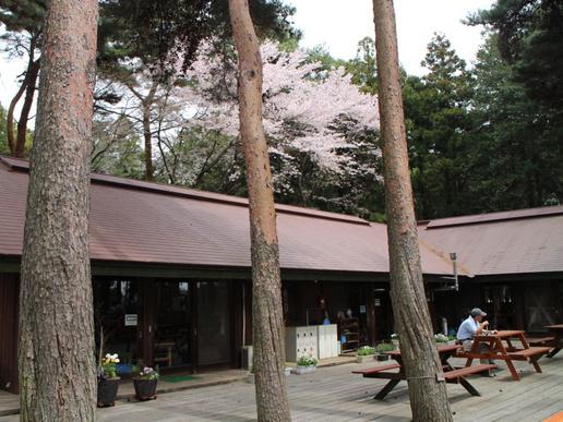 森の中でしっとりおそばを!手打ちそばがなんと400円「ゆかりの森長寿庵」