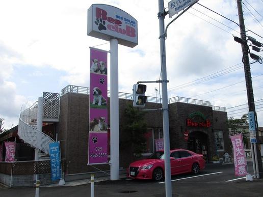 坂東太郎研究学園総本店横にドッグサロン「ビークラブ」が出店!ネコカフェもできる!!