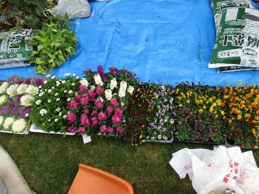 研究学園東横イン花壇の植え替えを行いました!彩り鮮やかな花壇ができました。