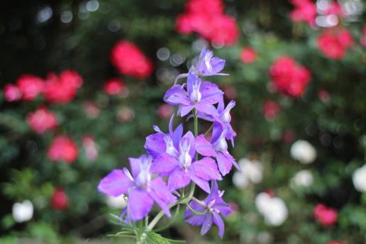 研究学園からほど近い森の中にある「秘密の花園」発見!