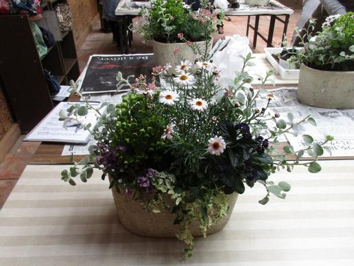 研究学園近くの寄せ植え教室「ソーマ」春の寄せ植えできました!