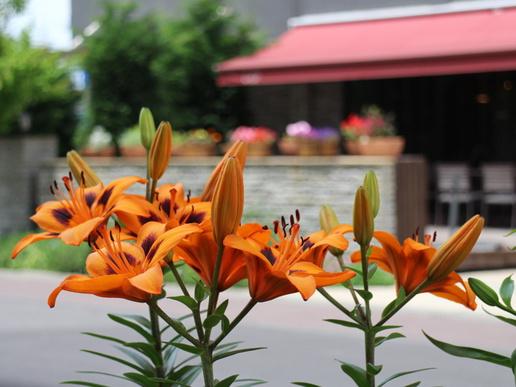 東横イン花壇改造!一年中楽しめる花壇に仕上げました!