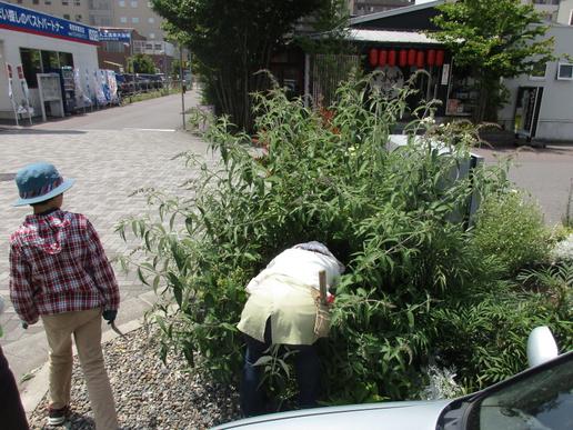 ポンパドウル花壇の庭木伐採、オーナーさんへ花たちの今後を託しました!