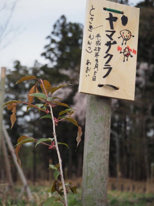 【募集】筑波ハム裏雑木林で「春のネイチャーウォーク&葛城里山クラブの集い」開催!