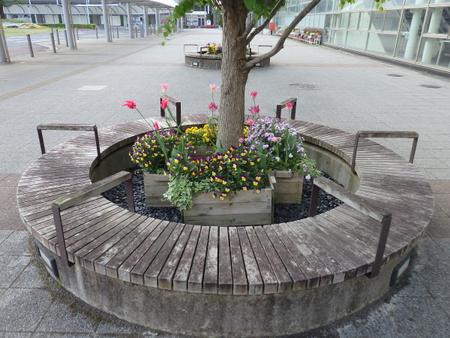 研究学園駅前円形ベンチ内のチューリップがきれいです!