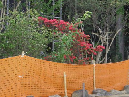 純和風の建物、お庭も素晴らしい「いおり庵」新店舗の様子!