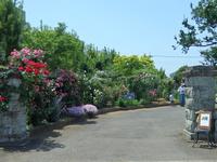 松代のオープンガーデンは花が咲き誇り見事でした!