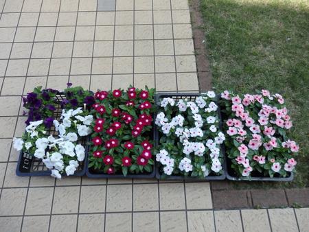 東横イン花壇に彩を加え素敵に変身しました!