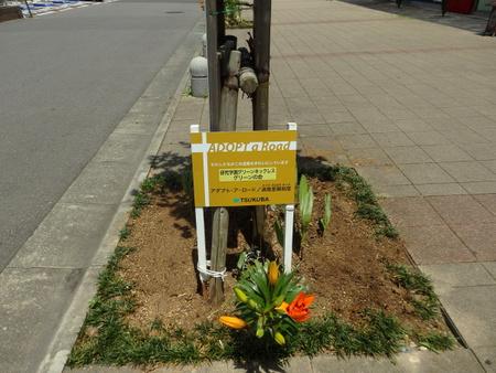 研究学園駅周辺花壇の春の植え替えいよいよ明後日(6/10)が最終日です!