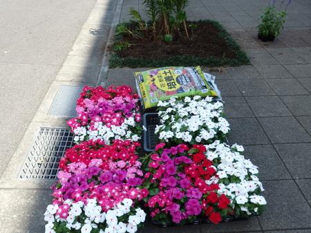MYU/MYUのカラーに合わせ赤と白のストライプの花壇を作りました!