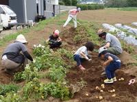 子供達も参加しジャガイモ掘りを行いました!