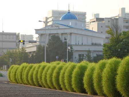 幹線道路沿い美酒堂そしてスーツのアオキ辺りの歩道花壇が素敵です!
