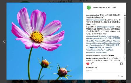 11/5まで筑波大雙峰祭開催!グリーンの会のインスタが選ばれた1