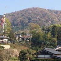 山桜の里 2015/04/17 13:37:52