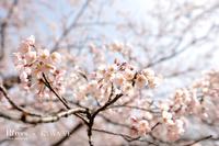 春ですね♪