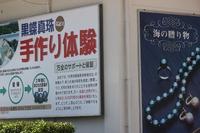 海の贈り物 黒蝶貝真珠の核入れ体験を!