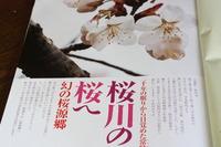 桜の桃源郷「桜川の桜」全国紙デビュー