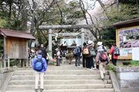 桜の里〝桜川磯部稲村神社〟の賑わい