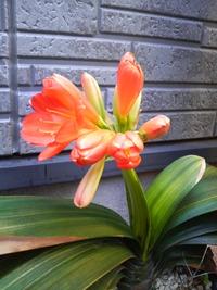華の花 ^^
