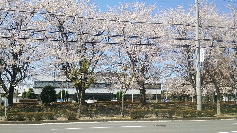 インテル 桜