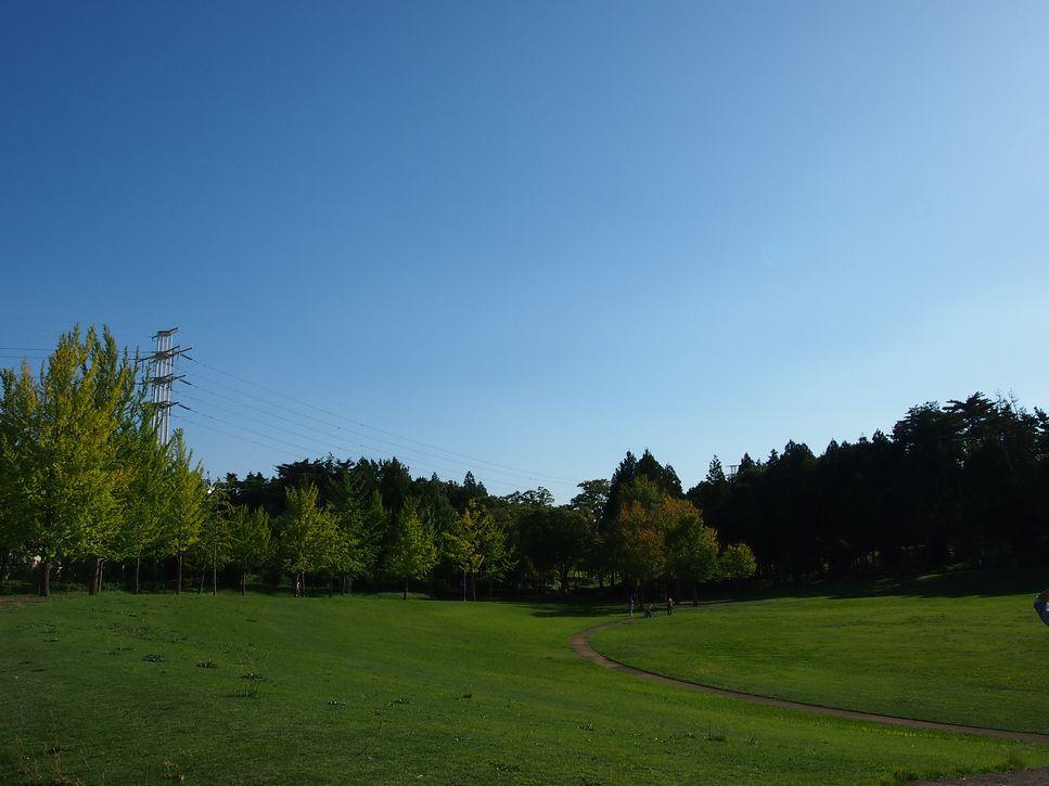 つくば 万博記念公園の紅葉の様子2013 その1