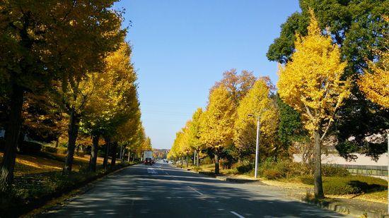 つくば 秋のとある日のとある場所を切り取ってみました! 2014  その2