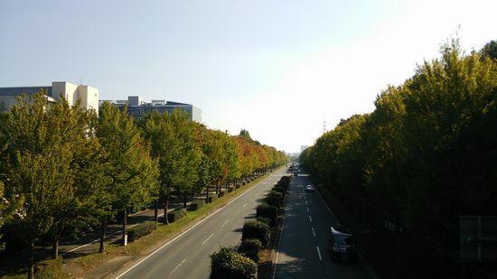 つくば 秋の風景2015