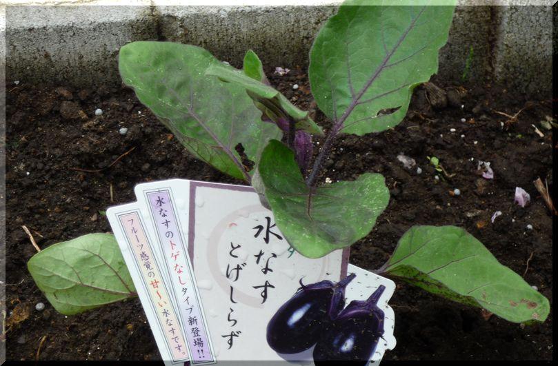 研究学園(つくば新都心) プチ畑 家庭菜園