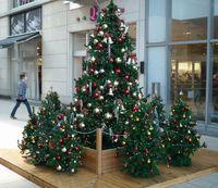 クリスマス特集2009 キュートのクリスマスツリーinつくば