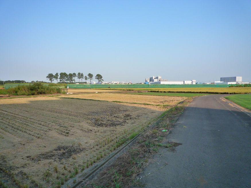 研究学園(つくば新都心) 稲刈りの季節になりました
