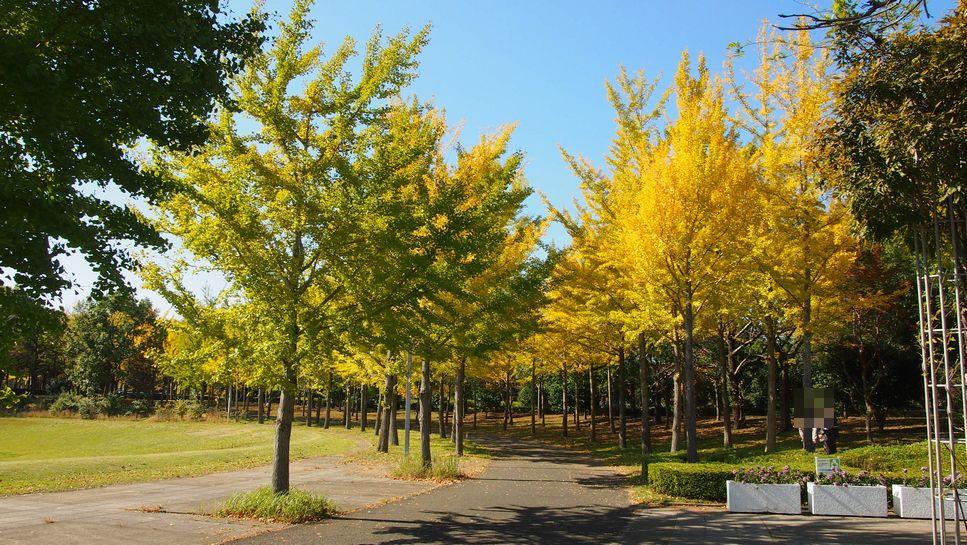 研究学園 万博記念公園の紅葉(11月4日の様子)