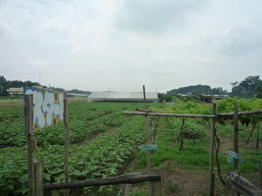 つくば みずほ村市場 体験農園が始まっています。