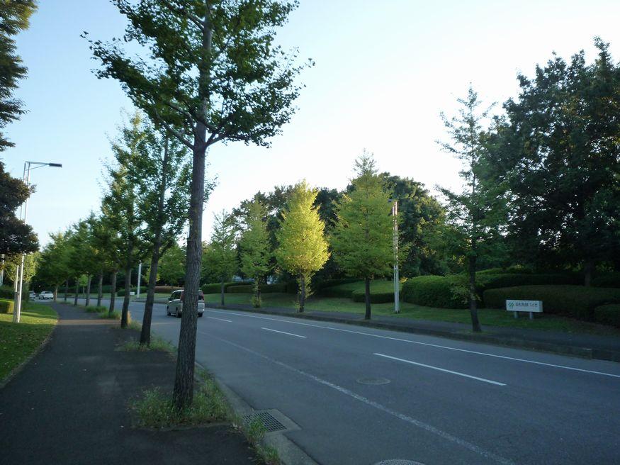 2010年 秋の気配 つくば市 万博記念公園