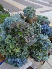 10月の出店予定(Sunday Bouquet)