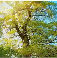 ふんわり香る☆彡癒やしのアロマヨガ…花粉症もスッキリ
