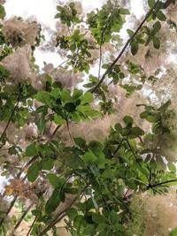 松見公園の不思議な植物