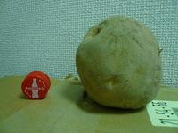 我らが北海道民会のBIGジャガイモ!!