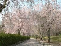 春ですね^^