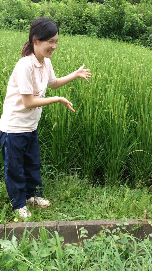 稲成長期4