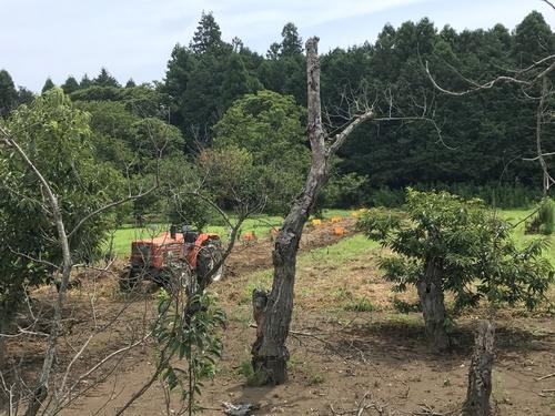 7/16.17 ごんべえさんち夏合宿2017
