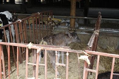 5月13日 村長ソロ 川島牧場訪問