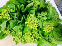 白菜菜花って知ってますか?